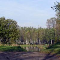 Staw Rzęsa -  Siemianowice, Тарновские-Горы