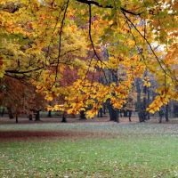 Siemianowice Sl. -Michalkowice   Park  (Jesien)  -   PL