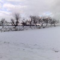Snowy Scene, Цеховице-Дзедзице