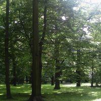 Park Miejski, Честохова