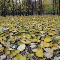 Siemianowice Sl. -Michalkowice   Park  (Jesien)  -   PL, Честохова