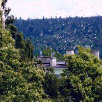 Ptasi zlot - też między wieżowcami..., Скаржиско-Каменна