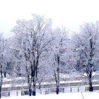Piłsudskiego  zimą  (drzewa na placu SP  Nr 1  od jej zachodniej strony), Скаржиско-Каменна