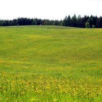 Barczewo - wiosenna łąka, Шхов