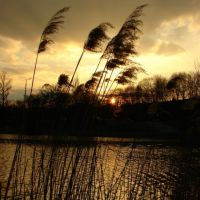 Sunset., Гнезно