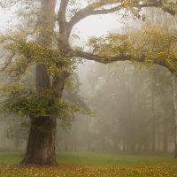 drzewo, Калиш