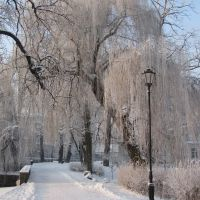 Winter walk in City Park at - 10 degrees Celsius, Калиш