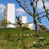 Natura i beton, Конин