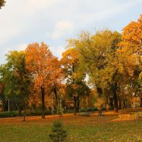 Leszno, Jana Pawła II - park Jonstona, Лешно