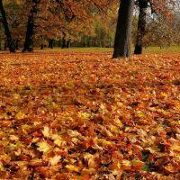 carpet of autumn leaves, Познань