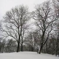 Koszalin #126, Кошалин
