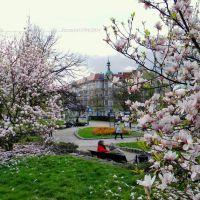 Szczecińskie MAGNOLIE...13/04/2014, Щецин