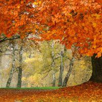 Szczecin - Image of the autumn..., Щецин