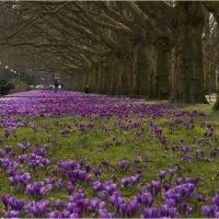 Jasne Błonia - wczesna wiosna, Щецин
