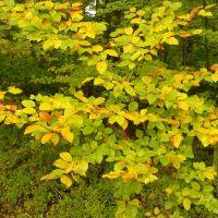 Autumnal colours, Згерз