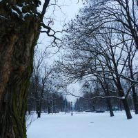 Zima w Parku Staromiejskim, Łódź/Winter in  Staromiejski Park, Lodz, Лодзь