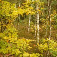 Autumnal forest, Озорков