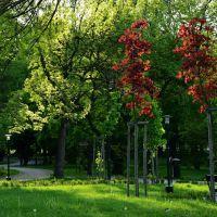Poland - Zamość. City Park..., Замосц