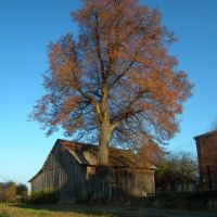 Pejzaż z drzewem i stodołą, Красник