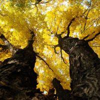 Złote korony drzew, Ополе