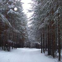 Зимний лес, Урай