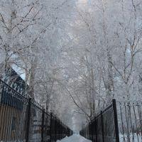 Морозный коридор (17 декабря 2011г.), Сургут