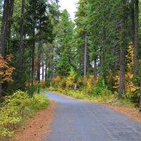Прогулка в осеннем лесу ~SAG~, Ханты-Мансийск