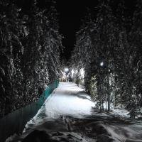 Ночной зимний лес   ~SAG~, Ханты-Мансийск