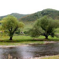 р. Сараса, Алтайский