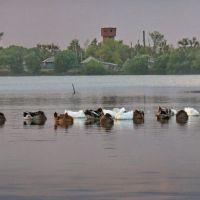 баево-озеро, Баево