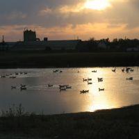 болото, Баево