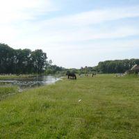 Цыганский конь, Белоярск