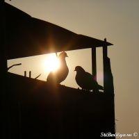 Голуби на крыше/Pigeons on a roof [10 эт], Бийск
