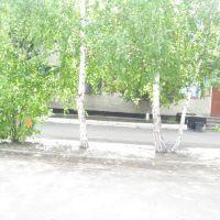Милиция (за деревьями), Бурла