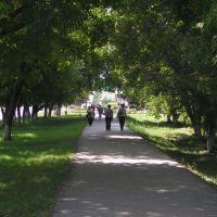 Аллея вдоль пр.Строителей, Заринск