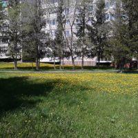 г. Заринск, полянка у к-т Заря вид 2, Заринск