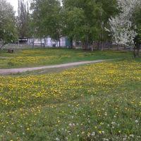 г. Заринск, полянка у дет. поликлинники, Заринск