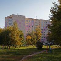 Зеленые дворы Заринска, Заринск