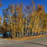 Altaysky Krai, Klyuchi, ul. Belinskogo; Алтайский край, село Ключи, осень на улице Белинского, Ключи