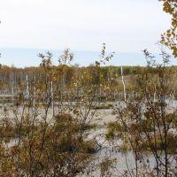 Заболоченная река Березовка, Кытманово