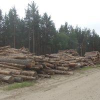 Ребрихинский лесхоз. Заготовка древесины., Ребриха