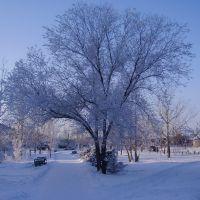 зимний день, Славгород