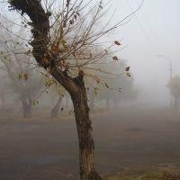 туманное утро, Славгород