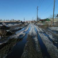 подснежники, Славгород