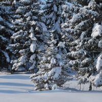 Зима в Солонешном., Солонешное