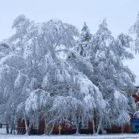 Первый снег., Солонешное