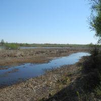 Озеро около р. Чумыш [5] - весна 2012, Тальменка