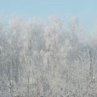 вид из окна, Усть-Калманка