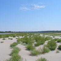 Зелёные островки., Шелаболиха