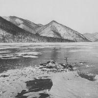 Изюбр, выгнанный волками на лед на устье Белобородовского / Manchurian deer killed by wolves on the ice, Айгунь